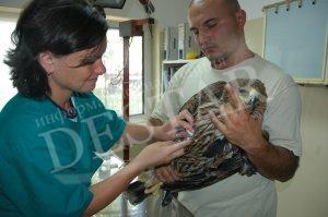 Спасителният център в Стара Загора е приел 1388 диви животни